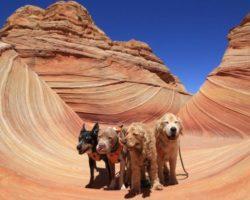 YOUR BEST VACATION WITH A PET—PART TWO