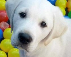 GREAT GIFTS FOR A HOUSEHOLD WITH A NEW DOG OR PUPPY
