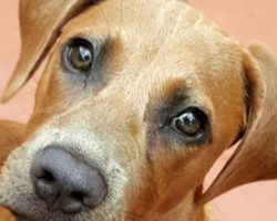 DOGGY DAY CARE—IS IT A GOOD CHOICE FOR YOUR DOG?